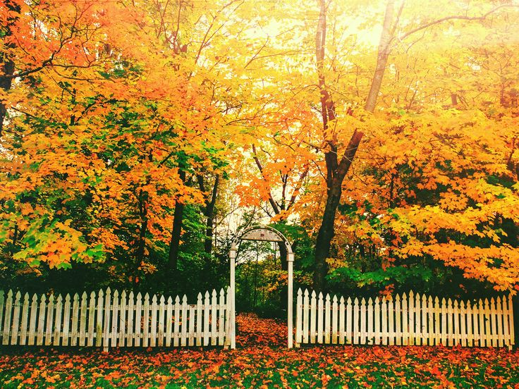 We love a white picket fence, and this charming one, guarding a colorful fall landscape as leaves begin to fall over Boone County, is no exception.  - GoodHousekeeping.com