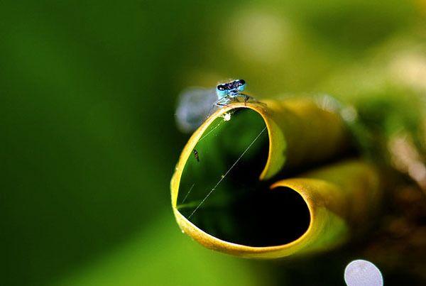 Beautiful Hearts of Nature