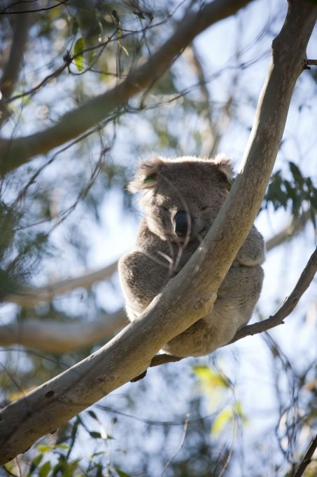 Tower Hill National Park
