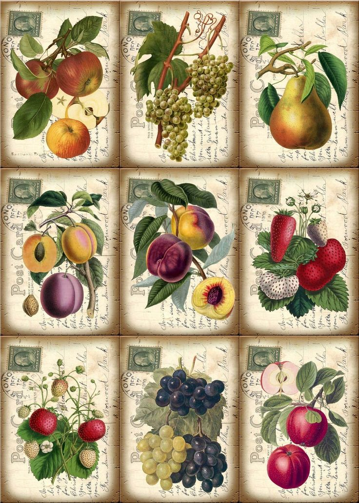 Vintage Fruit Post Card Hang Gift Tags
