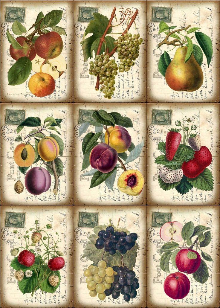 Vintage Fruit Post Card Hang Gift Tags