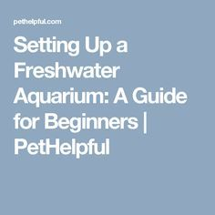 Setting Up a Freshwater Aquarium: A Guide for Beginners | PetHelpful