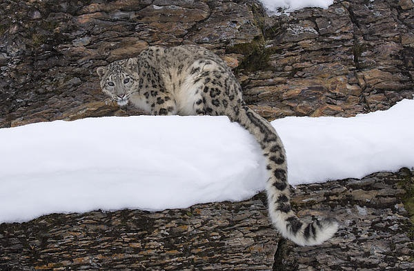 Another photo of the enormous tail.