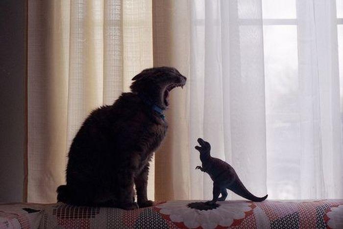 Shouting match :: Cat vs. T-rex