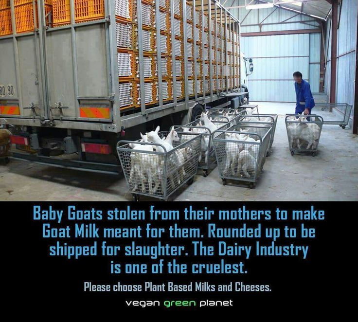 Meat and milk factories by peter