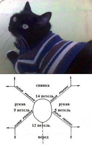 Одежда для кошек: Свитер реглан для кота. Инструкция по вязанию. | Донской Сфинкс Крысик