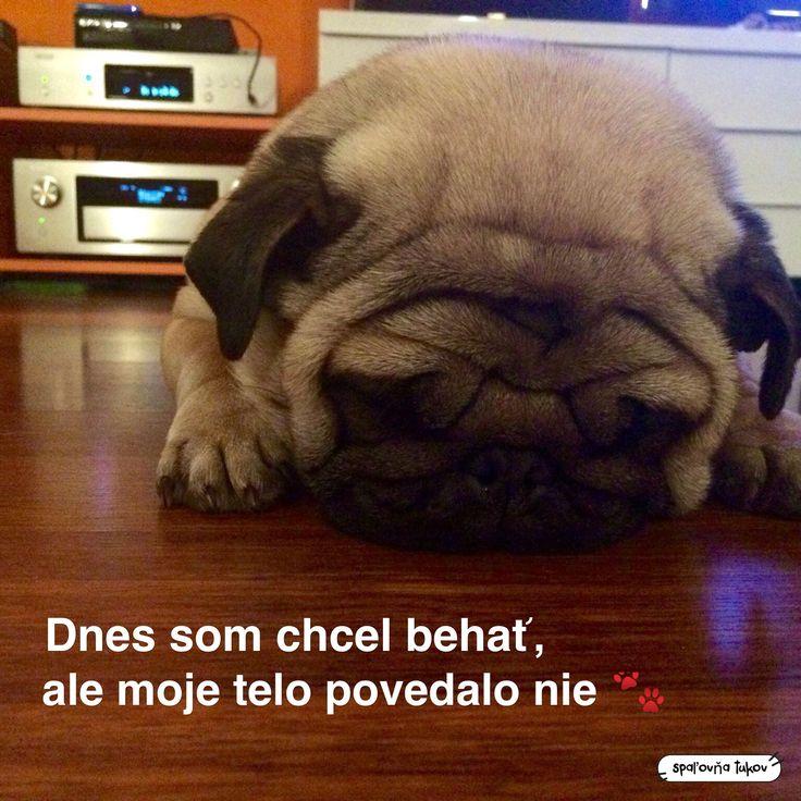 😉🐾 www.spalovnatukov.sk