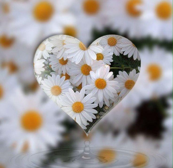 Daisy Heart ♡♡♡ Twitter