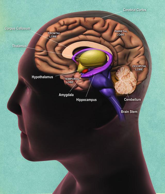 Il cervello e la macchina di Alan Turing.