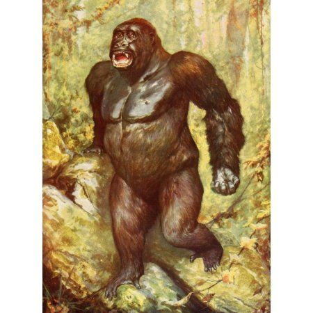 Posterazzi The Peoples Natural History 1903 The largest gorilla ever captured Canvas Art - Unknown (24 x 36)