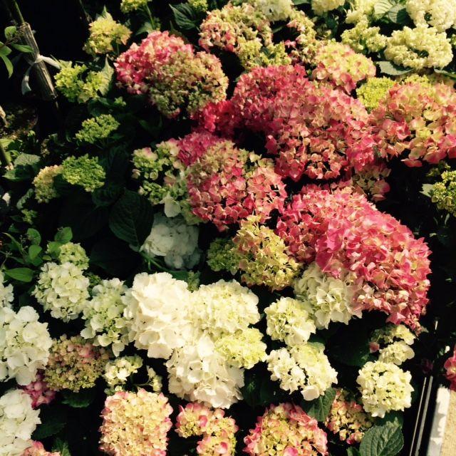 Květinové šílenství v Hornbachu #1