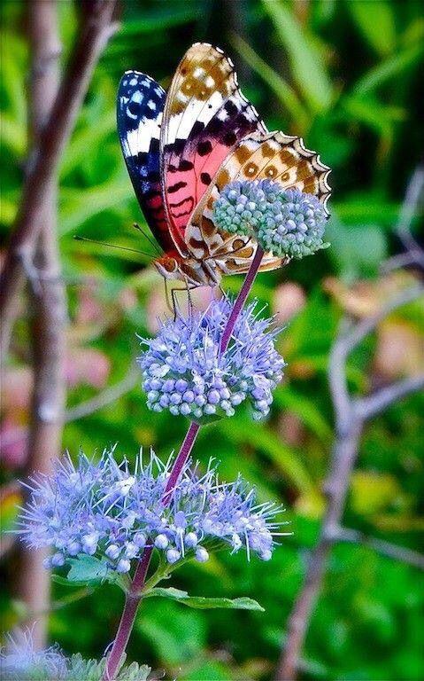 les 25 meilleures id es de la cat gorie chrysalide papillon sur pinterest flutterbye. Black Bedroom Furniture Sets. Home Design Ideas