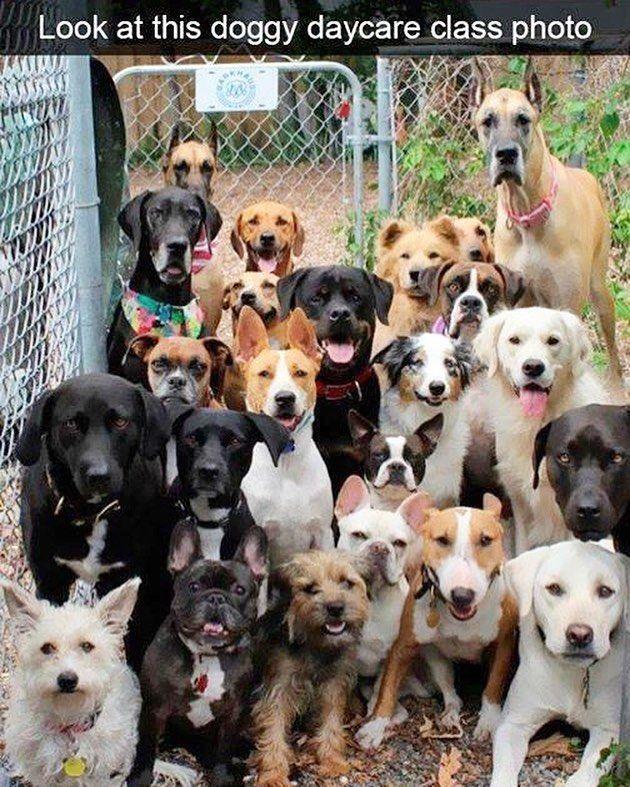 Dog Training Beginner Sit Means Sit Dog Training Reviews Dog