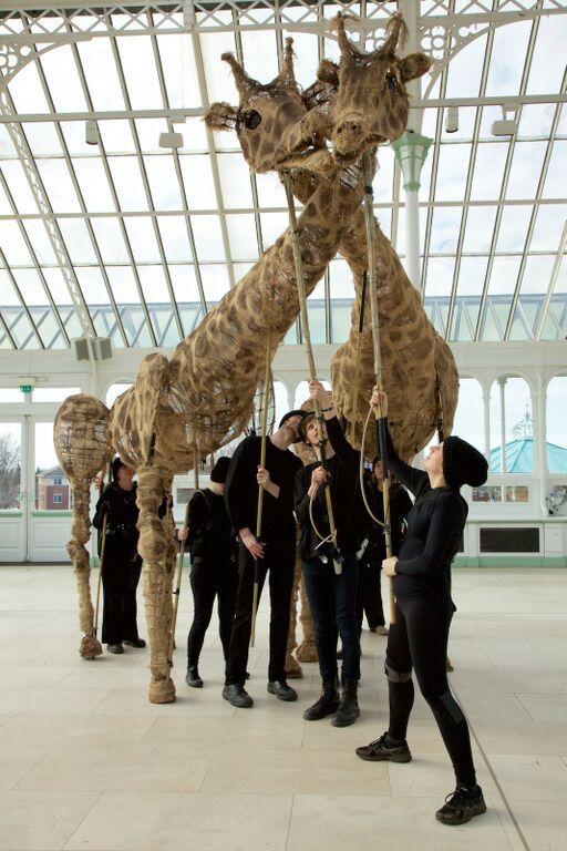 Dolly the Giraffe