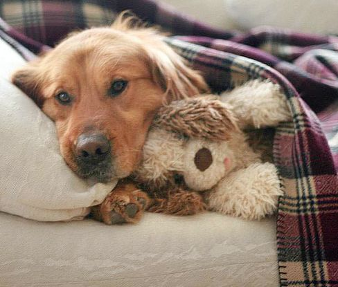 After a long day, nothing beats snuggling up with a tartan throw and your favourite stuffie.