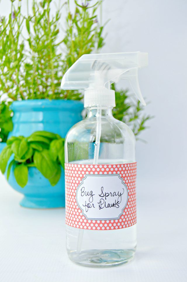 This homemade bug spray for plants will keep bugs from eating and infecting your plants. It doesn't contain a bunch of chemicals, so your kids can help garden.