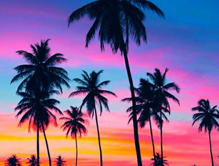 Sonnenuntergang-Bilder-süße-Nuancen-Himmel-Palmen-Strand