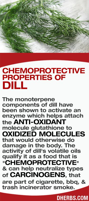 "The monoterpene components of dill have been shown to activate an enzyme which helps attach the anti-oxidant molecule glutathione to oxidized molecules that would otherwise do damage in the body. The activity of dill's volatile oils qualify it as a food that is ""chemoprotective""  & can help neutralize types of carcinogens, that are part of cigarette, bbq, & trash incinerator smoke. #dherbs #healthtips"