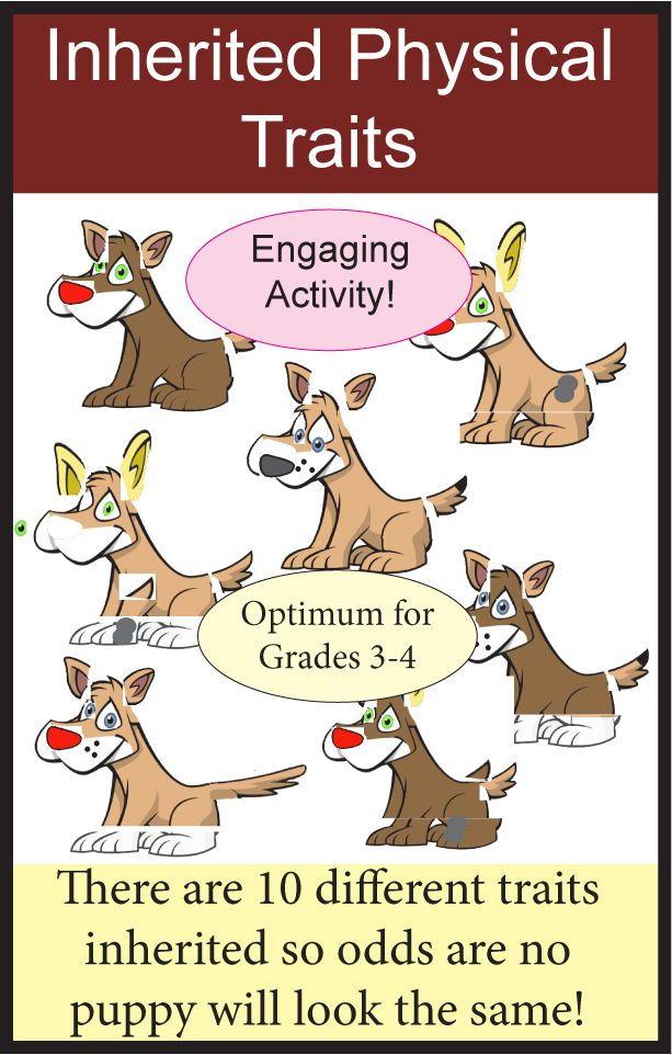 Genetics And Heredity Inherited Traits Activity Ngss 3 Ls3 1 Inherited Traits Genetics Activities Inherited Traits Activity