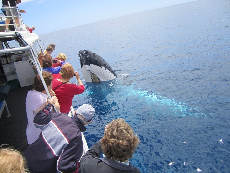 Incredible pre and post touring opportunities such as whale watching in Augusta.