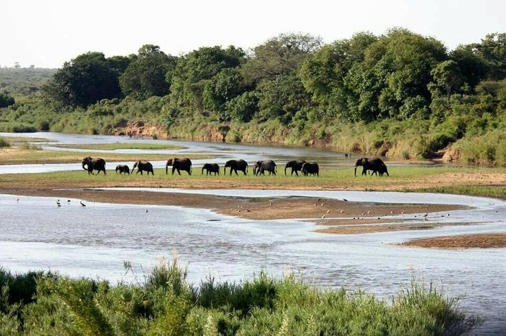 Elephant caravan - Lower Sabie KNP