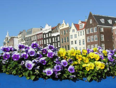 Marzo 2013: festival in viaggio. Da Amsterdam a Udaipur. Tutto pronto, Amsterdam è in fiore © Fotografia di Anna Rita Gioielli