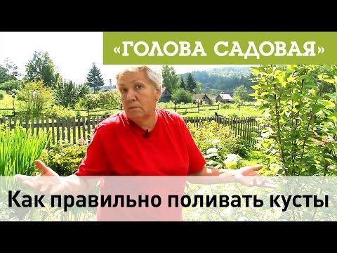 Голова садовая - Как правильно поливать кусты - YouTube