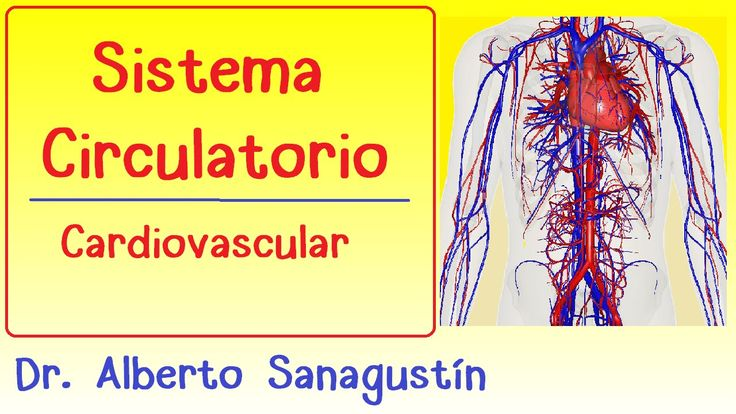 Mejores 19 imágenes de Sistema Circulatorio en Pinterest | Cuerpo ...