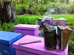 Best 7 Beekeeping Supplies Companies For Apiary