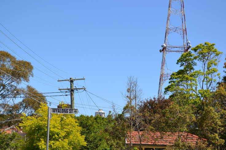 Wyalong Street, Willoughby