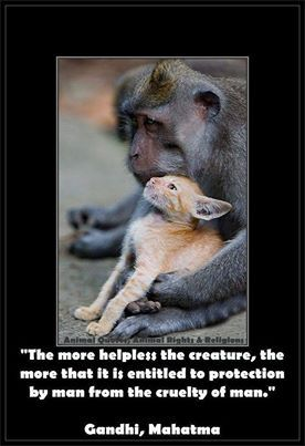 Animal Quotes, Animal Rights  Religions's photo: