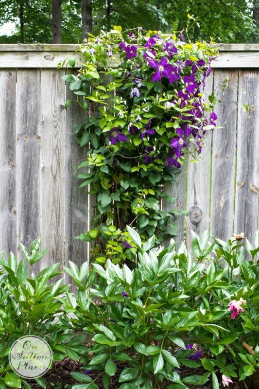 17 best images about Gardening Ideas Tips on Pinterest
