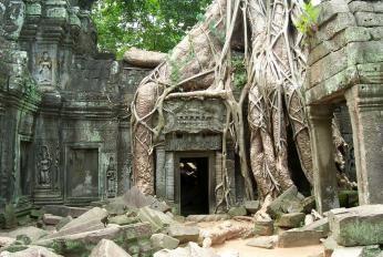 Ta Prohm ved Angkor Wat i Cambodka