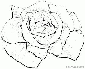 2008-02-14-rose-bw