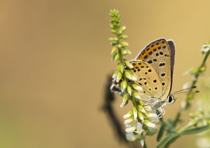 Butterfly by Nicola Di Nola on 500px