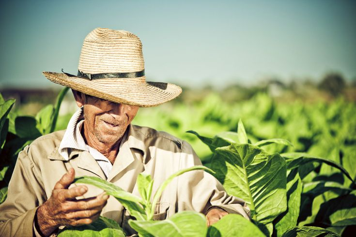 Cuba Farmers Can Sell Directly To Hotels And Restaurants