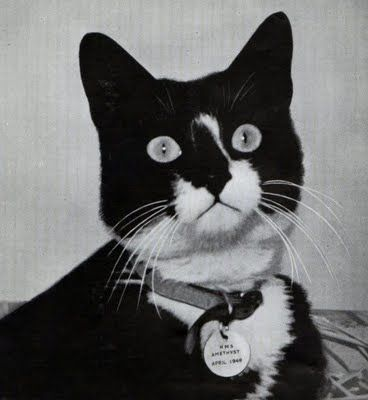 "The cat pictured is Seaman Simon. He was a WWII hero to men on the Amethyst. The article attached is about a different cat called Sam. The article is titled, ""Unsinkable Sam: The Cat that Survived Three Ships Sinking in WWII."""
