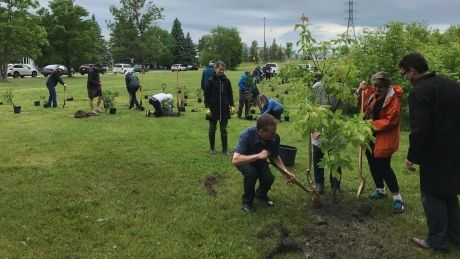 Winnipeg receives more than $25K in grants for greenery to honour Canada 150 - http://www.newswinnipeg.net/winnipeg-receives-more-than-25k-in-grants-for-greenery-to-honour-canada-150/