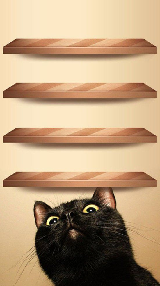 Curious Cat Wood Shelves: Your phone's all business, but your wallpaper doesn't have to be. Here's a giggle-inducing Curious Cat print — with shelves!