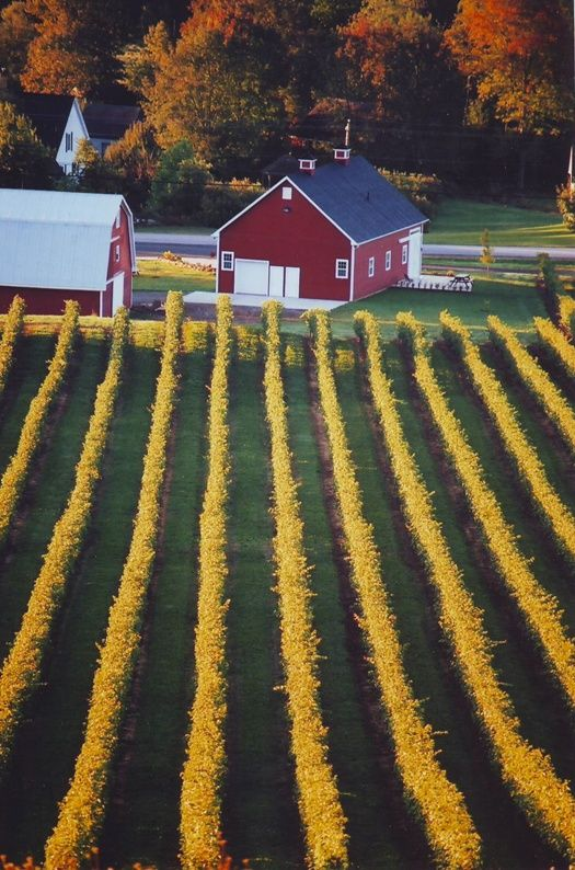 beautiful wine country, Nova Scotia, Canada