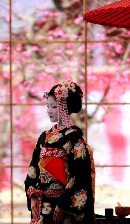 Geisha in Japan with cherry blossom trees