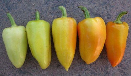 Best 20 stuffed sweet peppers ideas on pinterest cheese - Best romanian pepper cultivars ...