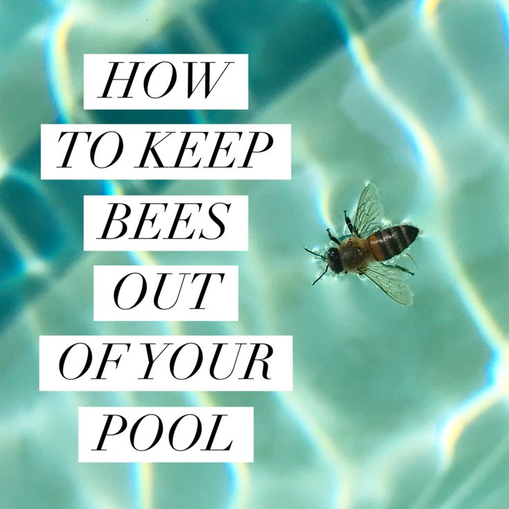 Honey bees need water, but often drown while trying to