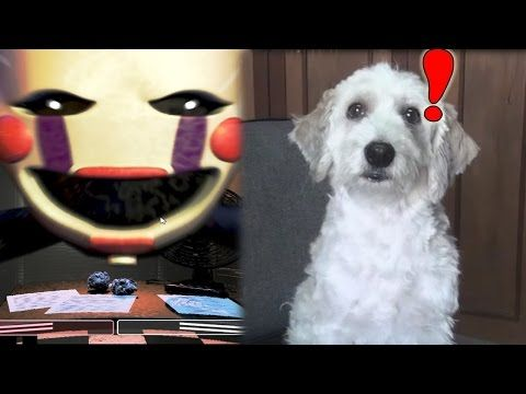 LA NOCHE FINAL - Five Nights At Freddy's 2 | Fernanfloo - YouTube
