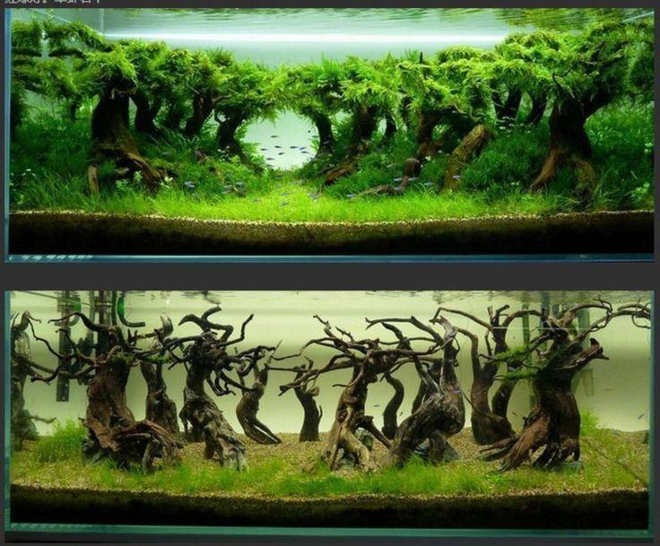 1000 Ideas About Aquascape Aquarium On Pinterest Aquarium