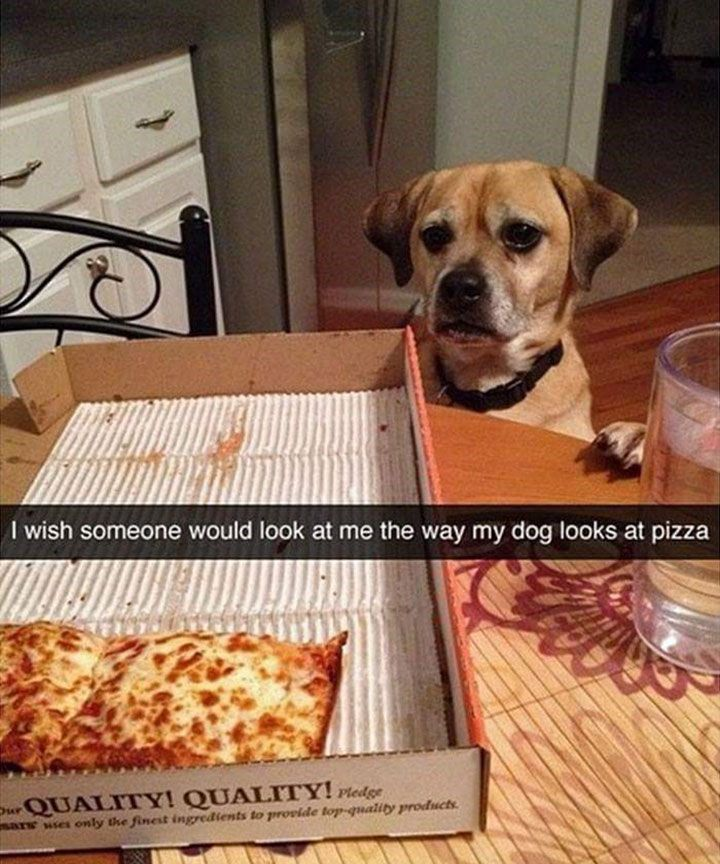 Best Dogs Funny Images On Pinterest Love Clothing And Dog - The 29 funniest dog snapchats of all time