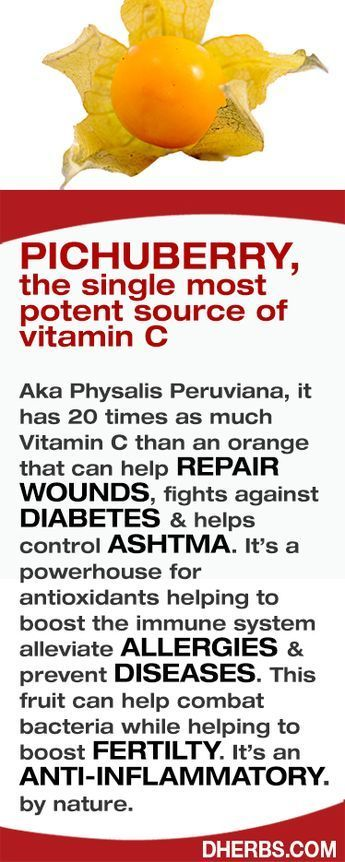 Pichuberry, the single most potent source of #vitamin C Aka Physalis Peruviana, it has 20 times as much Vitamin C than an orange that can help REPAIR WOUNDS, fight against DIABETES & helps control ASHTMA. It's a powerhouse for antioxidants helping to boost the immune system alleviate ALLERGIES & prevent DISEASES. This fruit can help combat bacteria while helping to boost FERTILTY. It's an ANTI-INFLAMMATORY by nature. #Dherbs
