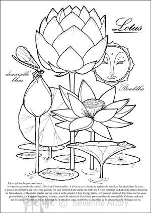 2-lotus