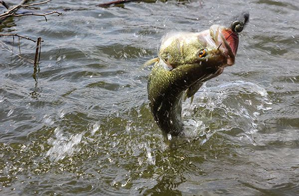 17 best images about fishing on pinterest fishing for for Best worms for fishing