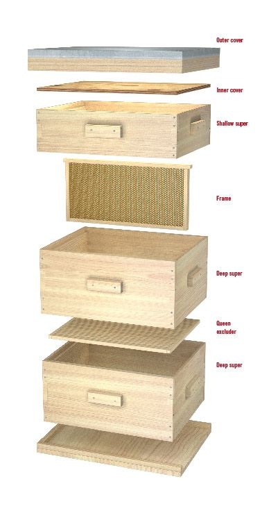 Learn how to build your own beehive!
